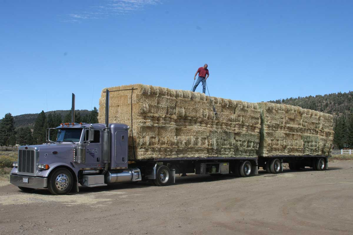 calliope wholesale hay amp feeds   want a load of hay